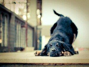 Беспородные собаки