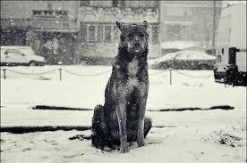 Стихи о бездомным собаках