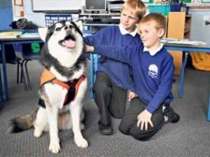 Собака стала помощником учителей в Англии