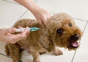 Прививке собаке