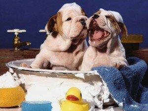 Как часто можно купать собаку?