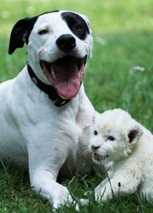 Собака усыновила львенка