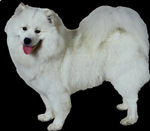 Собачий гороскоп: собака-Близнецы