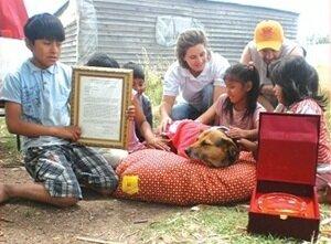 Бездомная собака спасла ребенка