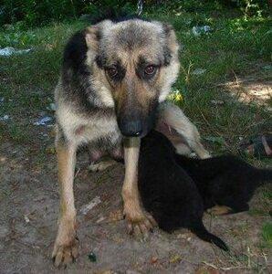 Выброшенная собака в Ивано-Франковске помогла выжить другой