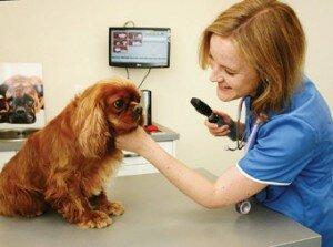 Как выбрать ветеринара и ветклинику?