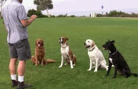 10 типичных ошибок при дрессировке собаки