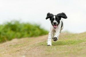 Как приучить щенка или взрослую собаку к кличке