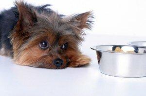 Расстройства пищеварения у собак: как предотвратить и что делать?