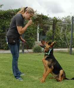 """Как правильно поощрять собаку при дрессировке: 5 золотых """"НЕ"""""""