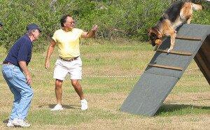 6 признаков «правильного» инструктора по дрессировке собак