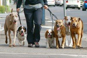 «Собачьи» правила хорошего тона или этикет собаковода