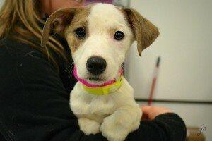 Что нужно купить щенку: «стартовый набор» для щенка