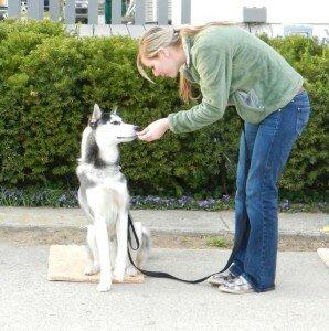 Самостоятельная дрессировка собаки: преимущества и недостатки