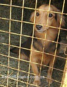 Собака из приюта: как правильно выбрать
