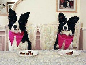 5 самых распространенных ошибок в кормлении собаки