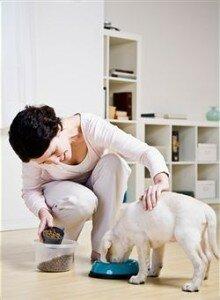 Как приучить щенка не подбирать объедки с земли на улице