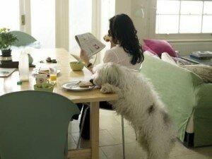 5 самых распространенных дурных привычек собак: как с ними бороться?