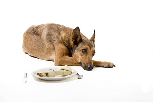 Что делать, если собака не хочет есть