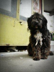 Вы подобрали собаку на улице: особенности ухода и воспитания бывшей бездомной собаки