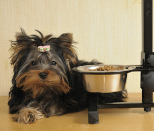 Как кормить собаку-привереду