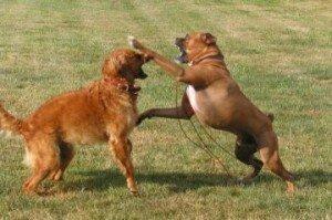Агрессия собаки к другим собакам: причины, способы решения проблемы