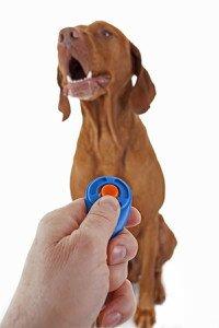 Кликер для собак, преимущества дрессировки собак с помощью кликера