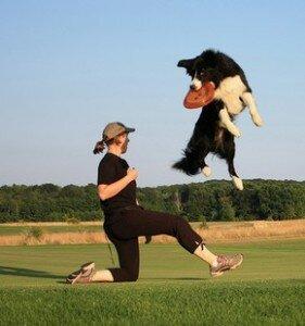Как выбрать породу собаки для занятий спортом