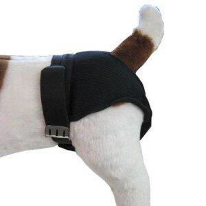 Течка (пустовка) у собак: признаки, длительность, поведение собаки, трусы для собак при течке