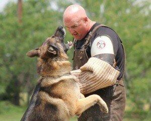 Рабочая собака: что за зверь и нужна ли она вам?