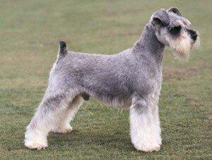 Топ-5 небольших пород собак для активных людей