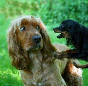 Собака боится других собак. Что делать, чтобы помочь собаке побороть страх?