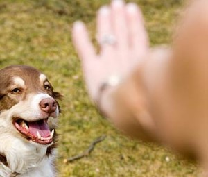 Как обучить собаку команде «Фу!»