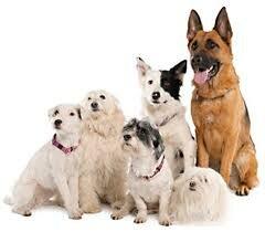 dogbreeds