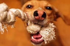 Игрушки для собак: тонкости выбора