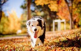 Как ухаживать за собакой осенью