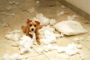 Самые распространенные ошибки начинающих собаководов