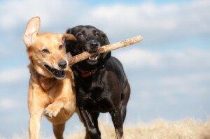 Благополучие вашей собаки: 6 главных составляющих