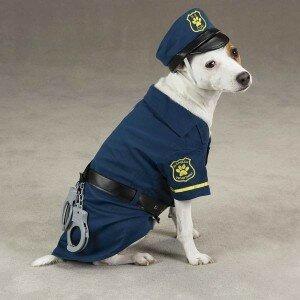 Из бродячих – в служебные. В Чили бездомных собак приняли на службу в полицию