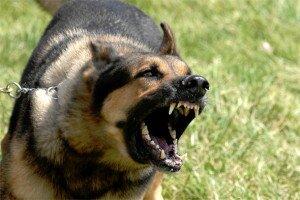 Собака бросается на людей. Как отучить собаку лаять и бросаться на прохожих?