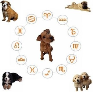 Собачья астрология с улыбкой