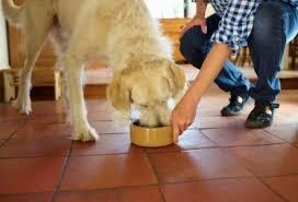 8 заповедей правильного кормления собак