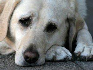 Понос (диарея) у собак: причины и лечение