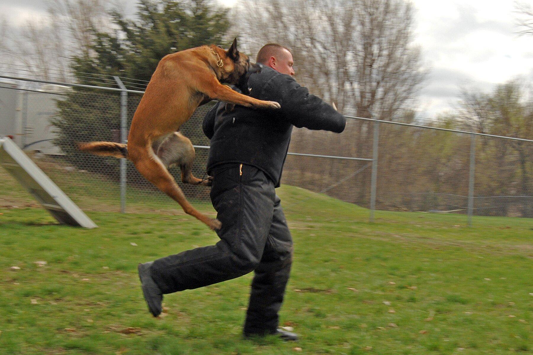 Кормление рабочих и спортивных собак