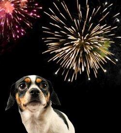 Собака боится петард, салютов и других громких звуков - что делать?