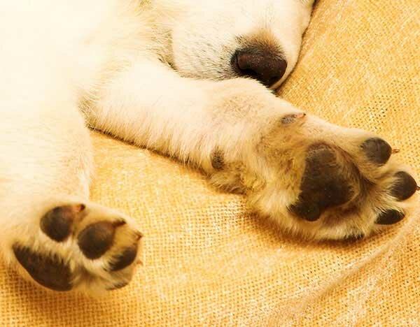 Как приучить собаку мыть лапы после прогулки