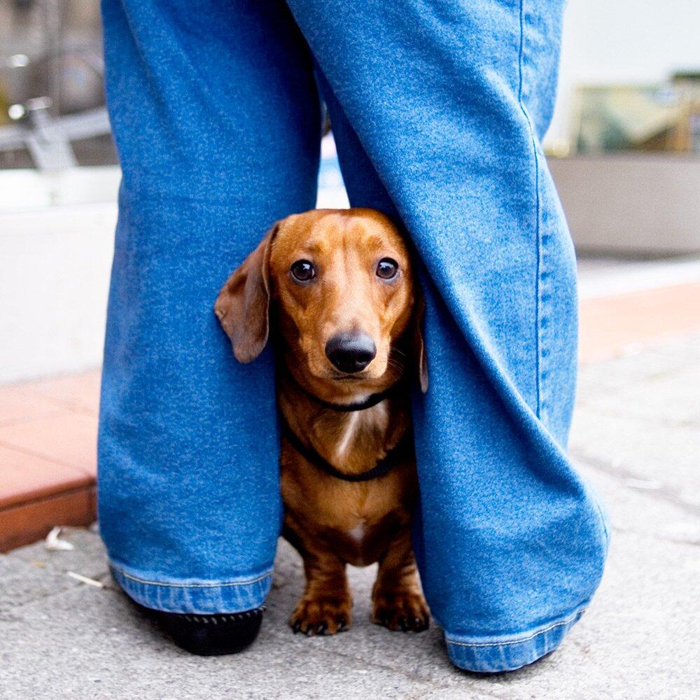 Как понять собаку: изучаем язык наших питомцев