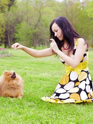 Дрессировка декоративных собак: особенности дрессировки маленьких пород собак