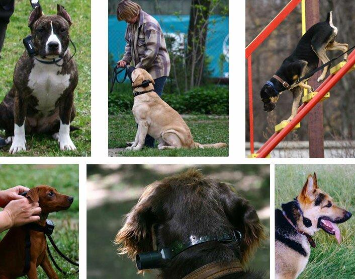 Электронный ошейник – короткий путь к взаимопониманию с собакой