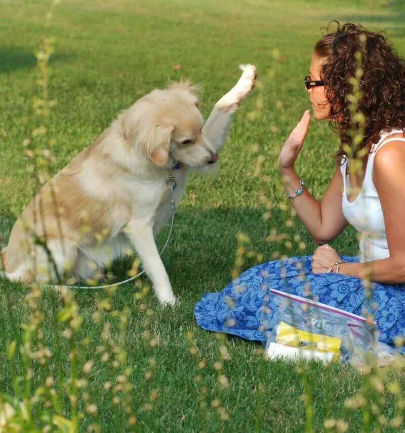 Дрессировка собак: 10 основных принципов